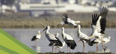 El Ayuntamiento palaciego organiza una Jornada de interpretación de aves y observación del medio natural en el Brazo del Este
